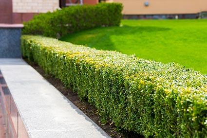 Horticultural Garden Maintenance